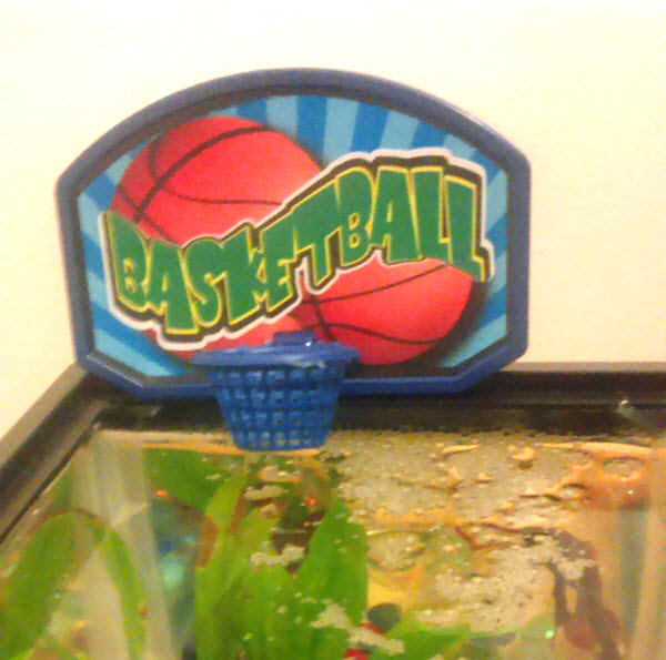 Betta fish fun mini basketball goodbetta for Betta fish toys