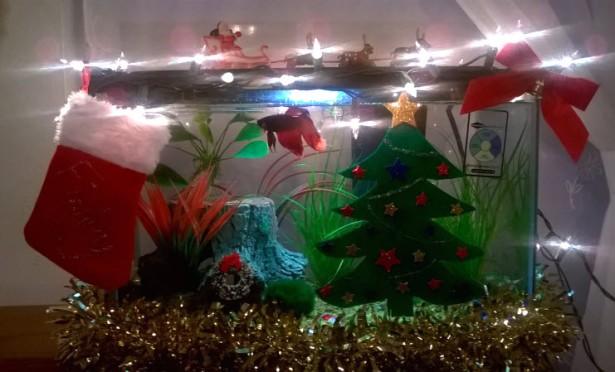 Diy betta fish christmas decorations finley b fish for Betta fish tank decorations